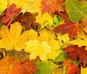 feuilles-mortes-avant